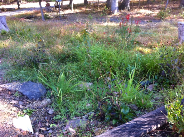 The bog garden Sept. 28., 2014